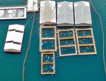 鯨魚監獄 生態煉獄 Nhà tù cá voi  Sinh thái luyện ngục